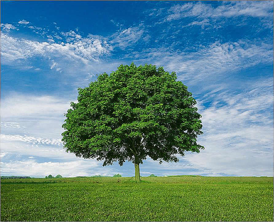 Árbol de la vida   OrEinSof.com