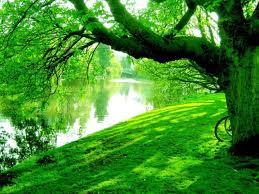 La Torá: árbol de la Vida